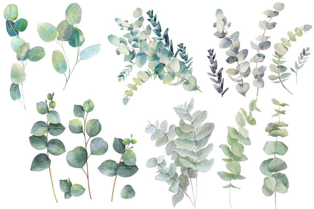 水彩植物INS风绿植叶子北欧装饰插画文艺手绘